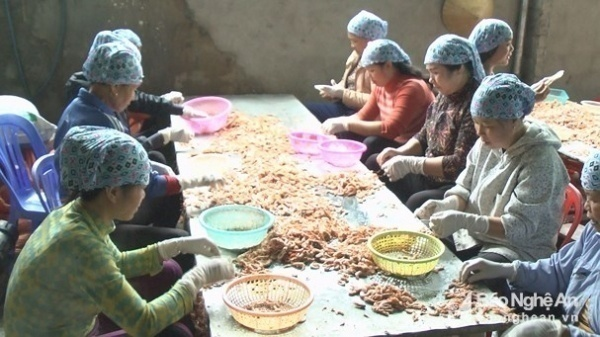 Bà con làng nghề Diễn Ngọc bóc sơ chế tôm nõn. Ảnh: Mai Giang