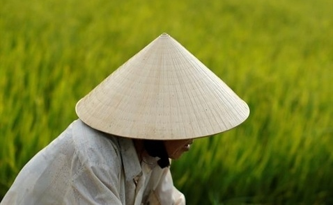 20180206_vietnam-rice-field_article_main_image_61617271