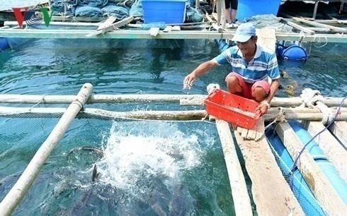 nuôi cá lồng bè, đảo Nam Du, Kiên Giang