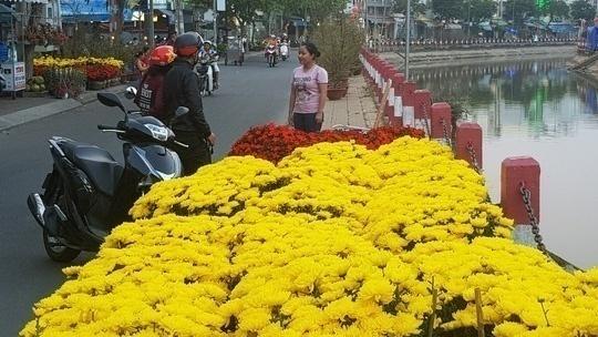 Hoa kiểng tại Cần Thơ có giá tăng cao so với năm trước