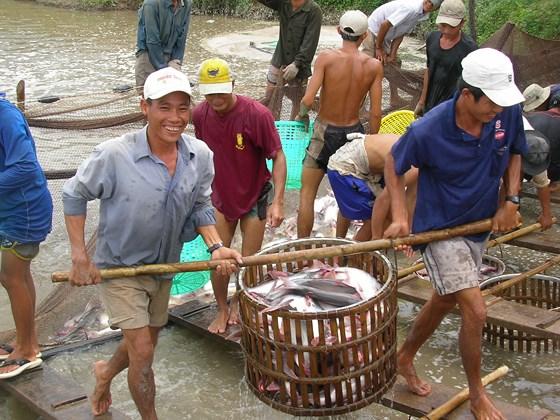 giá cá tra tại ĐBSCL
