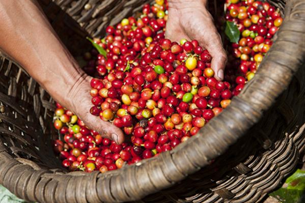 giá cà phê và tiêu