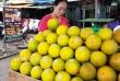 Nghệ An: Hơn 1 triệu quả cam Vinh sẽ được dán tem điện tử