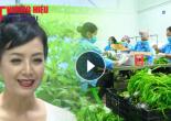 NSUT Chiều Xuân với nhiệm vụ đại sứ thương hiệu thực phẩm sạch của Công ty CP đầu tư An Hoà