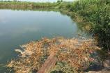 Hải Dương: Khởi tố vụ án cá chết hàng loạt ở huyện Nam Sách