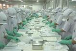 Xuất khẩu mực và bạch tuộc tiếp tục khởi sắc