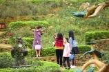 Chiêm ngưỡng vườn hoa hồng lớn nhất Việt Nam tại Lễ hội Xuân 2019