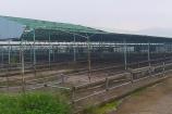 BIDV có mất vốn khi rót hơn 2.000 tỷ vào dự án chăn nuôi bò ở Hà Tĩnh?