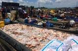 Nông dân lại khóc ròng vì cá bè chết trắng trên sông La Ngà
