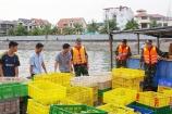Quảng Ninh: Bắt giữ hàng chục nghìn gia cầm nhập lậu