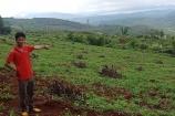 Đăk Nông: Người dân bất lực đứng nhìn hàng ngàn cây công nghiệp cưỡng chế