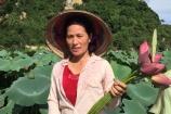 20 năm gắn bó với cây sen, mẹ Hà Nội thu nhập gần nửa tỷ mỗi vụ