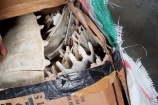 Hải Phòng: Tạm giữ lô hàng chứa mai, yếm động vật hoang dã