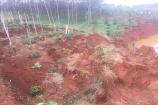 Sạt lở hồ thải quặng đuôi nhà máy Alumin Nhân Cơ, diện tích lớn cây trồng bị chôn vùi