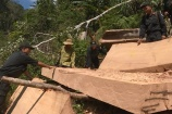 Phát hiện thêm 500m³ gỗ trong vụ phá rừng quy mô lớn ở Đắk Lắk