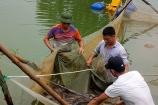 Bà Rịa - Vũng Tàu: Thử nghiệm nuôi cá Chình để chuyển giao công nghệ đến người dân