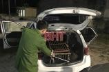 Bắt giữ xe taxi chở cá thể gấu nặng hơn 140kg