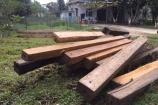 Hương Khê - Hã Tĩnh: Mạnh tay 'tuyên chiến' với gỗ lậu dịp Tết Nguyên đán