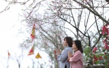 Ngất ngây với rừng hoa đào bung nở tại Sun World Fansipan Legend