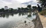Cá chết trắng hồ điều hòa ở Đà Nẵng do rò rỉ nước thải
