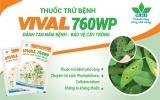 VIVAL 760WP – thuốc trừ nấm bệnh thế hệ mới của Nông dược HAI
