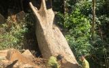 """Đắk Lắk: Đoàn kiểm tra """"theo chân"""" phóng viên vào vùng lõi khu Bảo tồn thiên nhiên Nam Kar"""