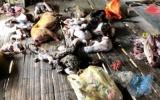 Thanh Hóa: Khởi tố đối tượng chuyên buôn bán động vật quý hiếm