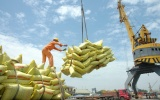 Xuất khẩu gạo trong 6 tháng tăng mạnh so với cùng kỳ năm 2019