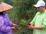 Bảo vệ môi trường bằng trồng cây Paulownia