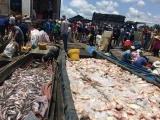 Bộ TNMT đề nghị xác định nguyên nhân tình trạng cá chết trên sông La Ngà
