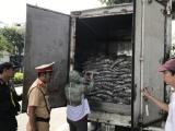 Đà Nẵng: Bắt giữ xe tải chở 3,5 tấn cá bốc mùi hôi thối nồng nặc