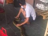 Đà Nẵng: Phát hiện trăn gấm quý hiếm giữa trung tâm thành phố
