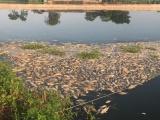 Đang điều tra vụ hàng tấn cá chết nghi bị đầu độc ở Hải Dương