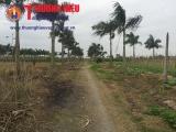 Hà Nội: Đất của dự án khu nhà ở Hoàng Vân 'đem' làm nghĩa trang (kỳ 2)
