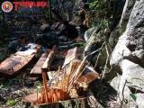 Xử lý nghiêm vụ phá rừng nghiêm trọng ở Phong Nha - Kẻ Bàng