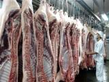 Tăng kích cầu, cấp đông và chế biến để 'giải cứu' thịt lợn rớt giá