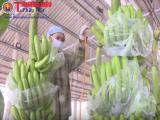 Cảnh giác với 13 doanh nghiệp nhập khẩu trái cây có dấu hiệu lừa đảo tại UAE