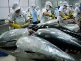 Cá ngừ Việt Nam đã 'bơi' đến gần 140 quốc gia trên thế giới