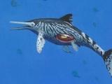 Hóa thạch ngư long 200 triệu năm còn nguyên phôi thai