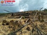 Thanh Hóa: Xử phạt hành chính các hộ gia đình phá rừng nghèo kiệt