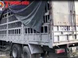 Nghệ An: Bắt giữ xe chở 500 lốp ô tô không rõ nguồn gốc