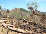 Tạm giam 2 nghi phạm vụ tàn phá gần 61 ha rừng ở Bình Định