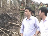 Nghệ An: Đề xuất cách chức trưởng ban tuyên giáo huyện vì rừng bị phá