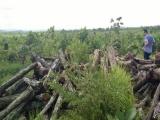 Đắk Lắk: Nguyên giám đốc bị bắt vì hủy hoại rừng