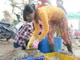 Ngư dân Khánh Hòa trúng tôm hùm, cá lồng sau bão số 12