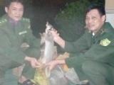 Bắc Giang: Bắt xe khách vận chuyển 9 cá thể động vật rừng trên ôtô khách