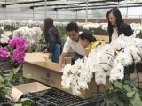 Nông dân Đà Lạt trúng mùa hoa Tết