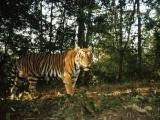 Cùng nâng cao nhận thức về bảo vệ các loài mèo lớn