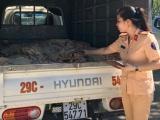Thanh Hóa: Tạm giữ xe ôtô vận chuyển một tấn bì lợn bốc mùi hôi thối