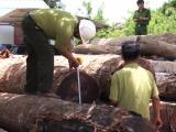 Vụ trùm gỗ lậu Phượng 'râu': Khởi tố Hạt trưởng kiểm lâm